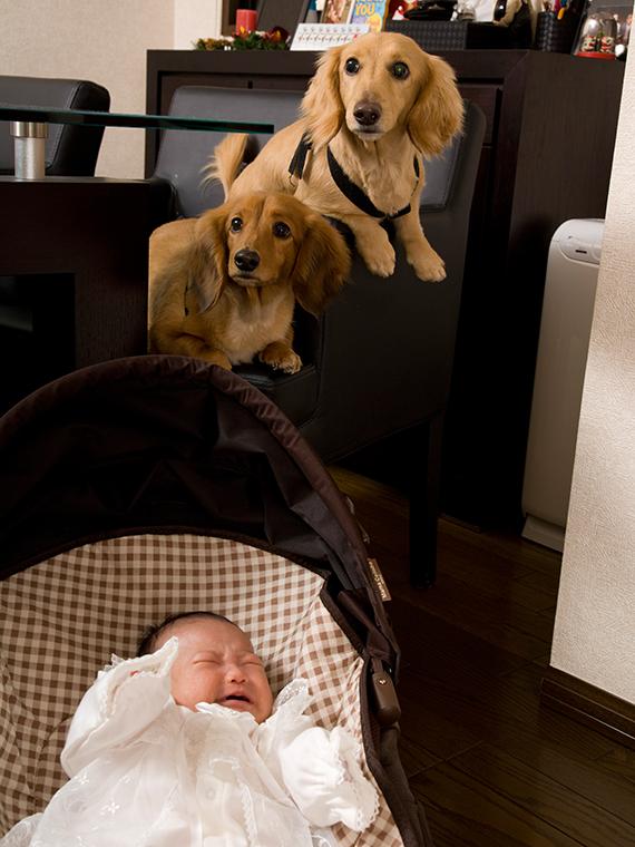 愛犬と赤ちゃん、一緒に自宅で年賀状用撮影を