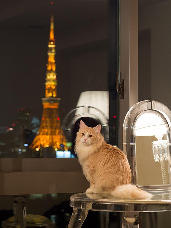 出張撮影ロングプラン 猫(東京23区内)