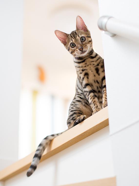 子猫のうちに撮りたくて