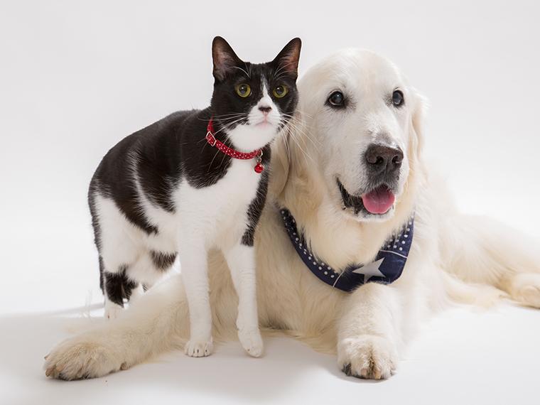 愛犬と愛猫を一緒に撮れるスタジオを探して