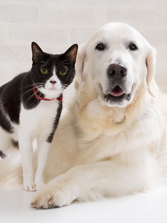 スタジオ撮影ロングプラン(背景2パターン)犬猫