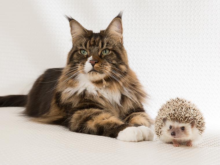 ハリネズミと猫、奇跡の2ショット