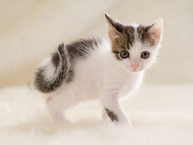 猫好きプロならではの可愛い写真