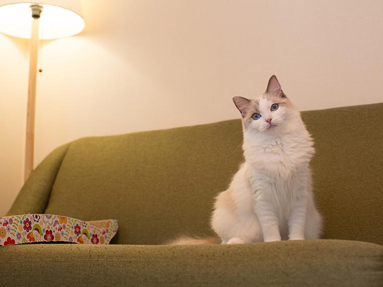 1年目の記念、自宅で愛猫の撮影を