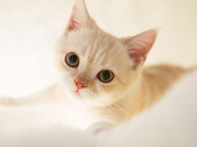 大暴れの子猫でも撮れるんですね