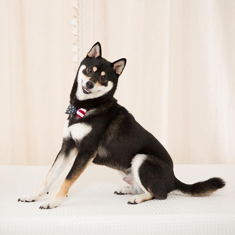 スタジオ撮影プラン 犬