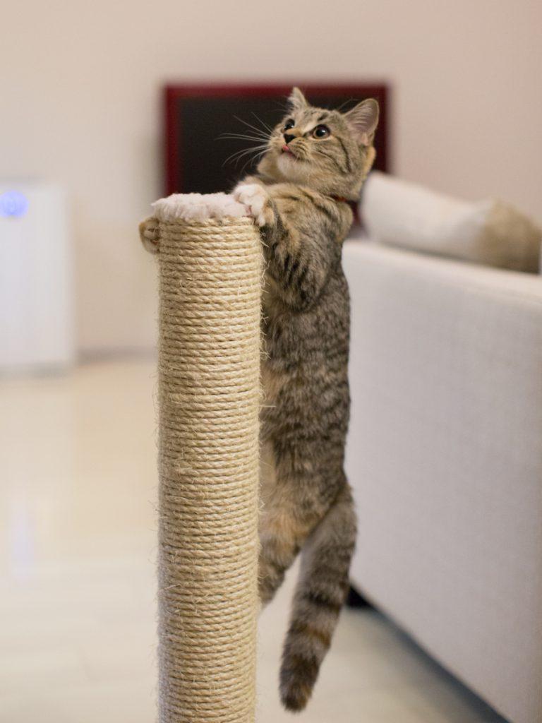 出張撮影プラン 猫(八王子市)