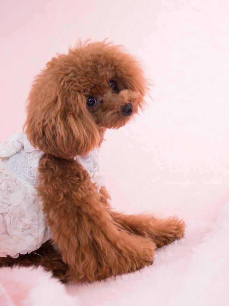スタジオ撮影ロングプラン(背景2パターン)犬
