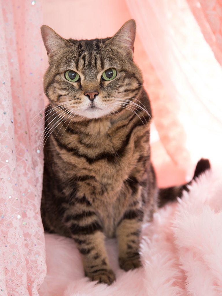 スタジオ撮影ロングプラン(背景2パターン)猫