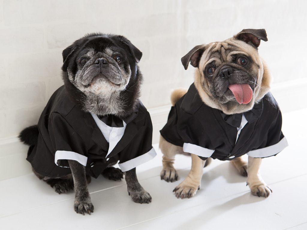 スタジオ撮影ロングプラン(背景2パターン)犬2匹