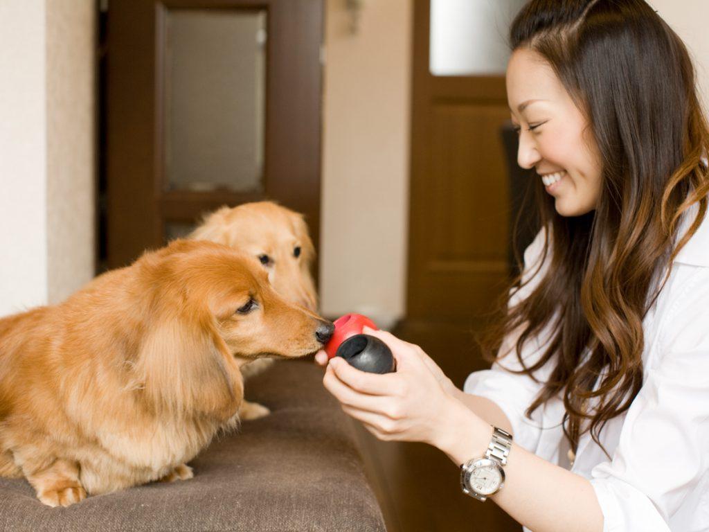 出張撮影ご家族一緒 ロングプラン 犬2匹 ロケ&自宅(東京23区内)